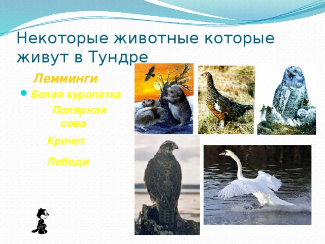 Некоторые животные которые живут в Тундре  Лемминги . Белая куропатка  Полярная сова Кречет Лебеди