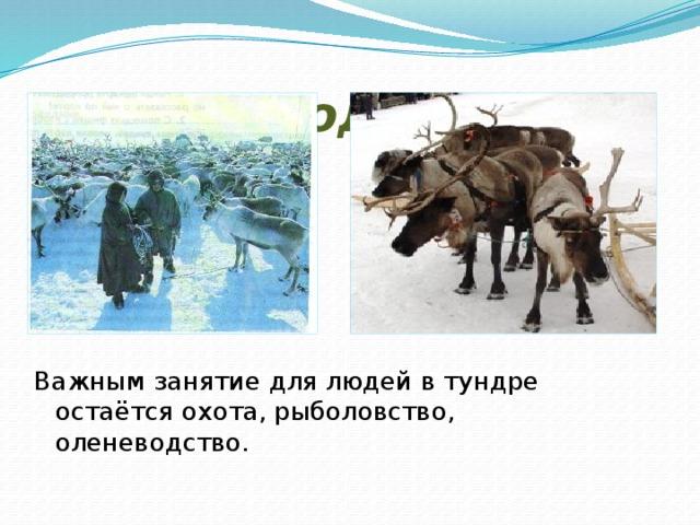 Жизнь людей. Важным занятие для людей в тундре остаётся охота, рыболовство, оленеводство.