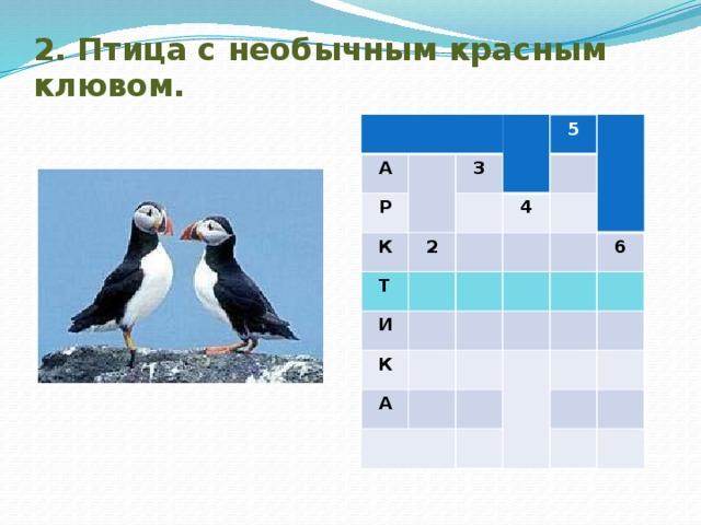 2. Птица с необычным красным клювом. А Р 3 К 2 5 Т 4 И К А 6