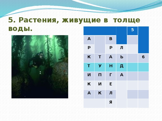 5. Растения, живущие в толще воды. А Р В К Т Р Т 5 И Л А У Ь П К Н Д Г И А А 6 К Е Л Я