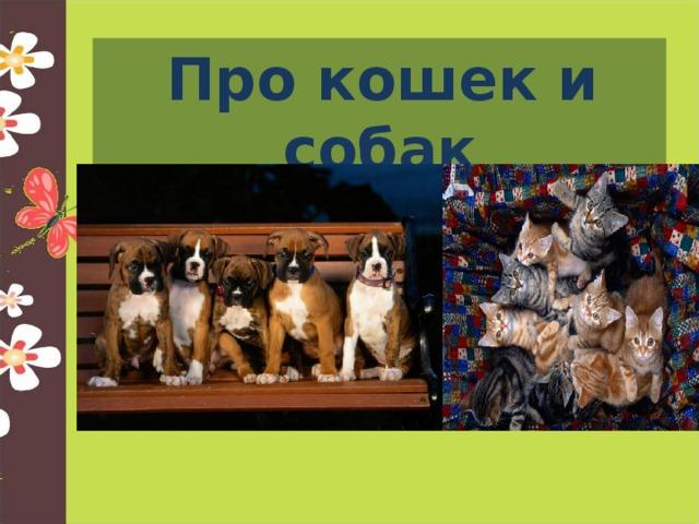 Про кошек и собак