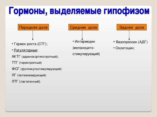 Вазопрессин (АДГ)  Окситоцин;  Интермедин (меланоцито- стимулирующий)  Гормон роста (СТГ);  Регуляторные