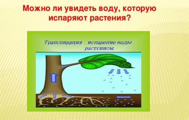 Можно ли увидеть воду, которую испаряют растения?