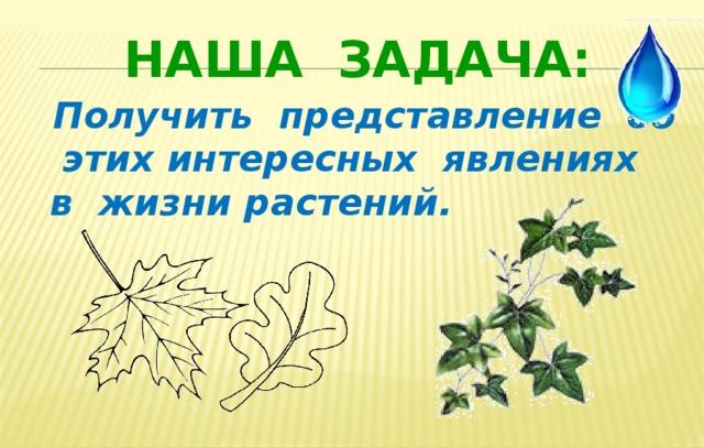 Наша задача:  Получить представление об этих интересных явлениях в жизни растений.