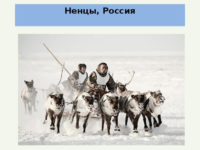 Ненцы, Россия