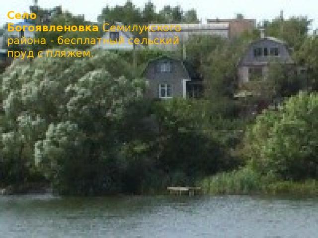Село Богоявленовка Семилукского района - бесплатный сельский пруд с пляжем.