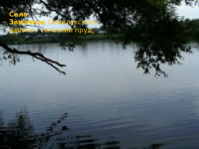 Село Землянск Семилукского района - сельский пруд.
