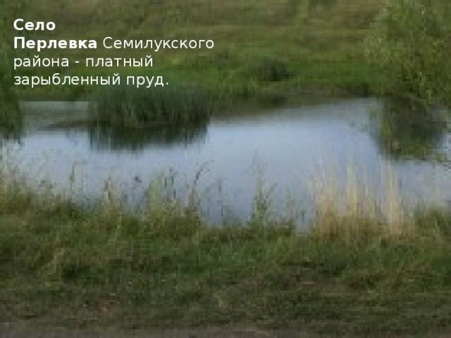 Село Перлевка Семилукского района - платный зарыбленный пруд.