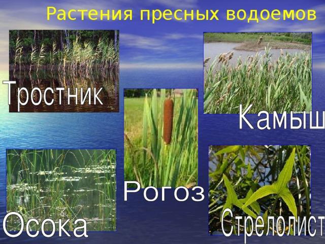 Растения пресных водоемов