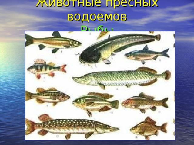 Животные пресных водоемов  Рыбы