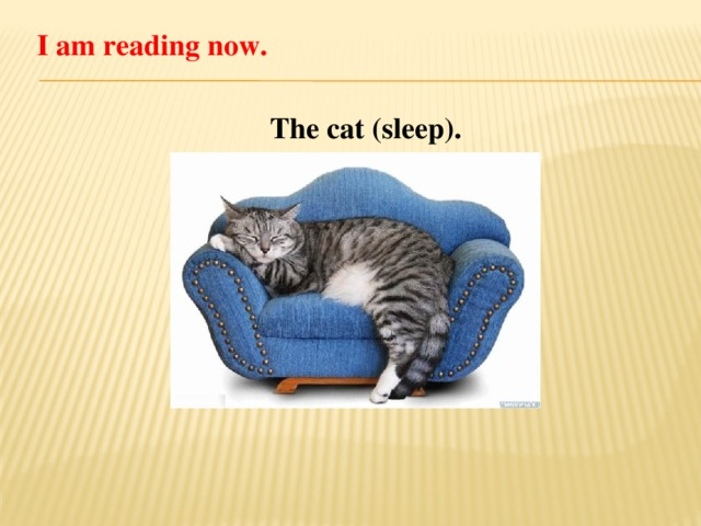 I am reading now. The cat (sleep).