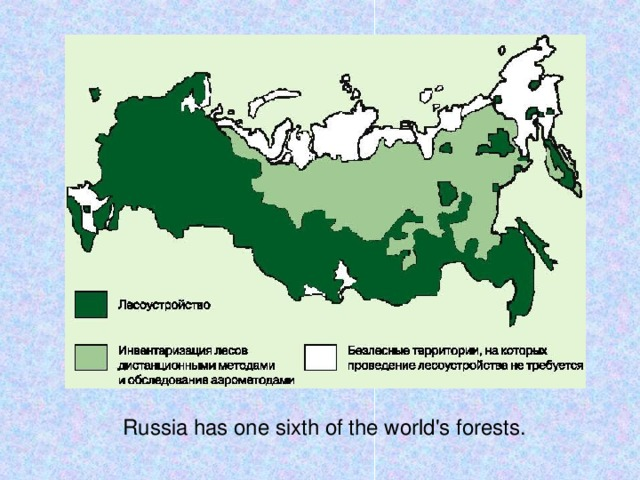 Russia has one sixth of the world's forests.