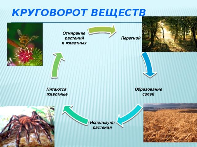 Круговорот веществ Перегной Отмирание  растений  и животных Образование Питаются  животные  солей  Используют  растения