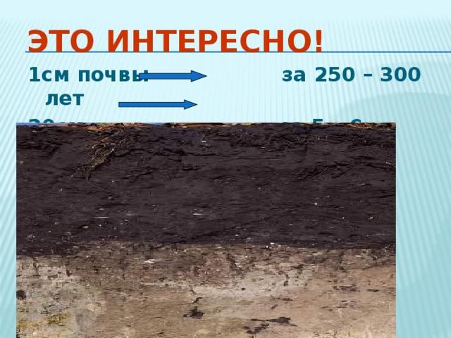 Это интересно! 1см почвы за 250 – 300 лет 20см за 5 – 6 тысяч лет  30