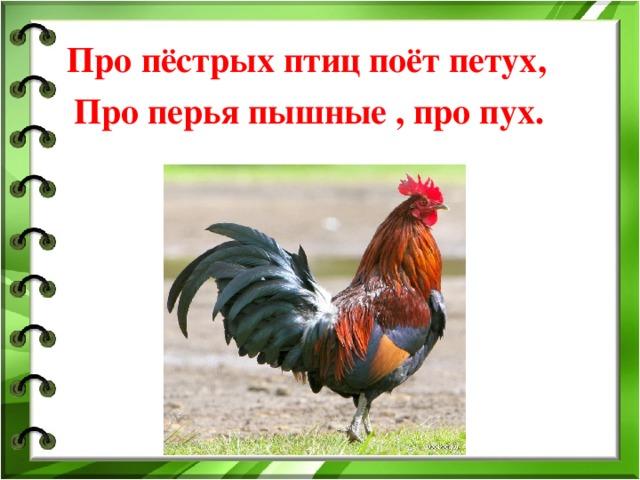 Про пёстрых птиц поёт петух ,  Про перья пышные , про пух.