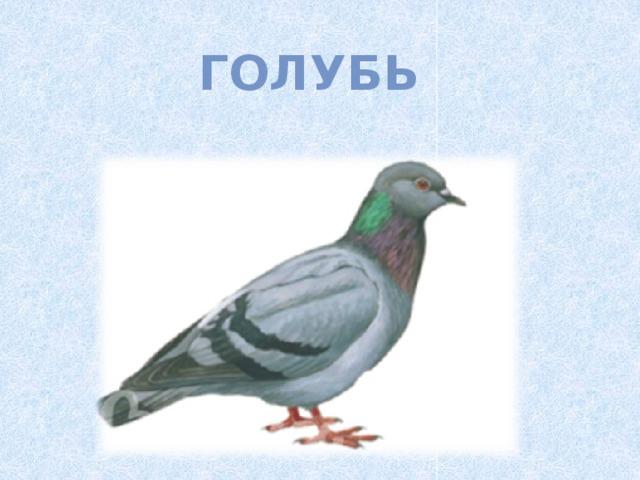Картинки для дошкольников зимующие птицы
