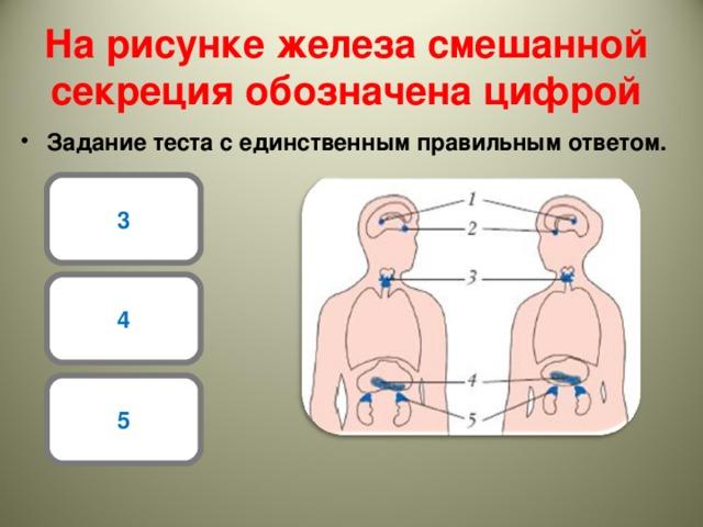 На рисунке железа смешанной секреция обозначена цифрой Задание теста с единственным правильным ответом. 3 4 5