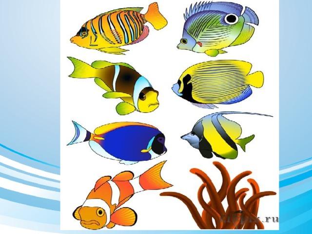 смотрят картинка рыбка средняя группа это один самых