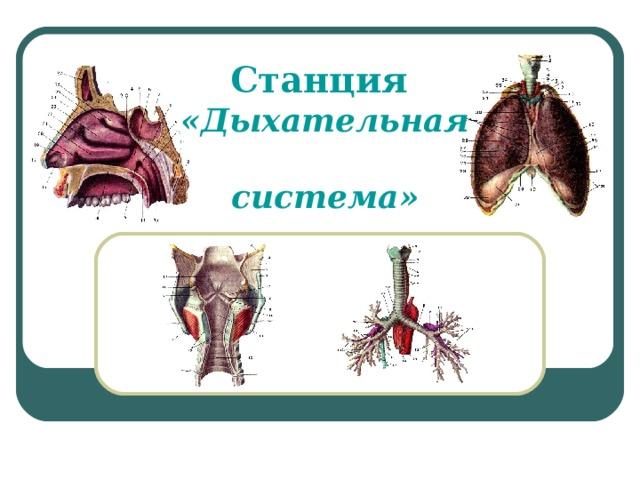 Станция  «Дыхательная  система»