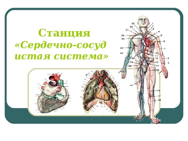 Станция «Сердечно-сосудистая система»
