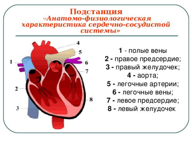 Подстанция   « Анатомо-физиологическая характеристика сердечно-сосудистой  системы» 1 - полые вены 2 - правое предсердие; 3 - правый желудочек; 4 - аорта; 5 - легочные артерии; 6 - легочные вены; 7 - левое предсердие; 8 - левый желудочек