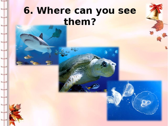 6. Where can you see them?