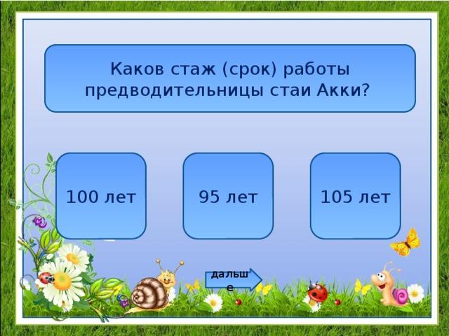 Каков стаж (срок) работы предводительницы стаи Акки? 100 лет 95 лет 105 лет дальше