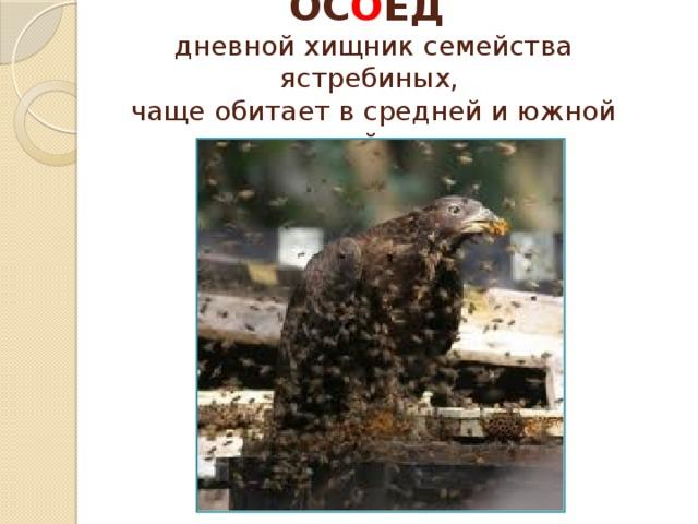 ОС О ЕД  дневной хищник семейства ястребиных,  чаще обитает в средней и южной тайге.