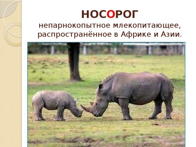 НОС О РОГ  непарнокопытное млекопитающее, распространённое в Африке и Азии.
