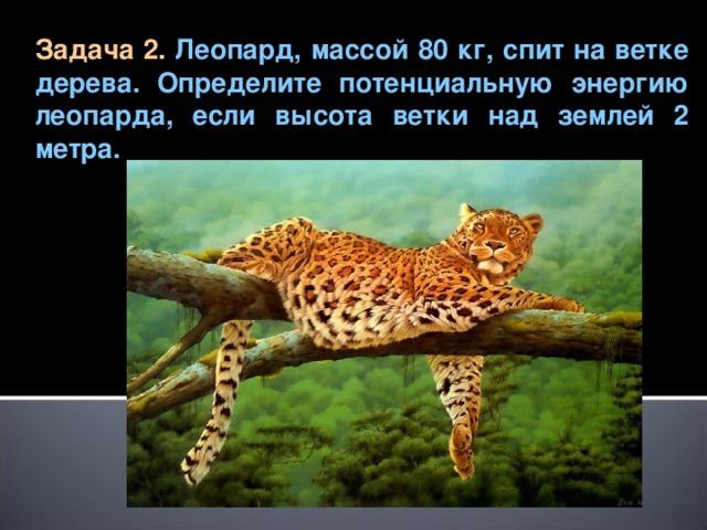 Задача 2.  Леопард, массой 80 кг, спит на ветке дерева. Определите потенциальную энергию леопарда, если высота ветки над землей 2 метра.