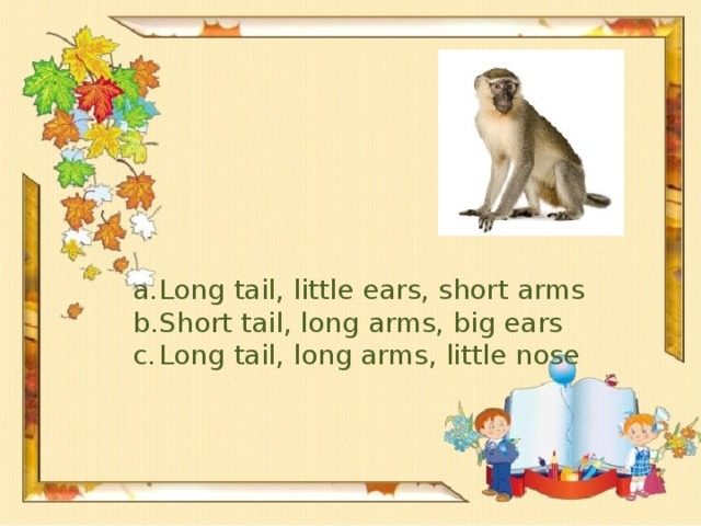 Long tail, little ears, short arms Short tail, long arms, big ears Long tail, long arms, little nose
