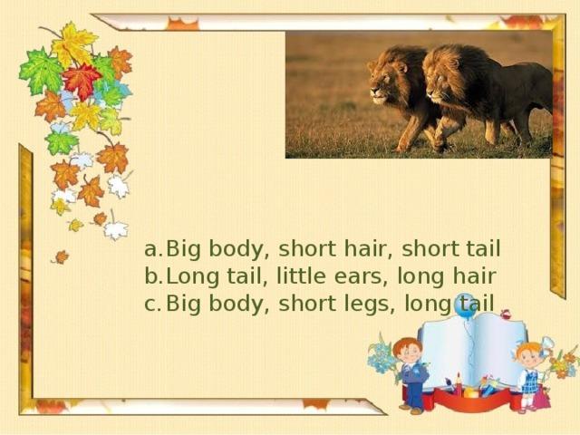 Big body, short hair, short tail Long tail, little ears, long hair Big body, short legs, long tail