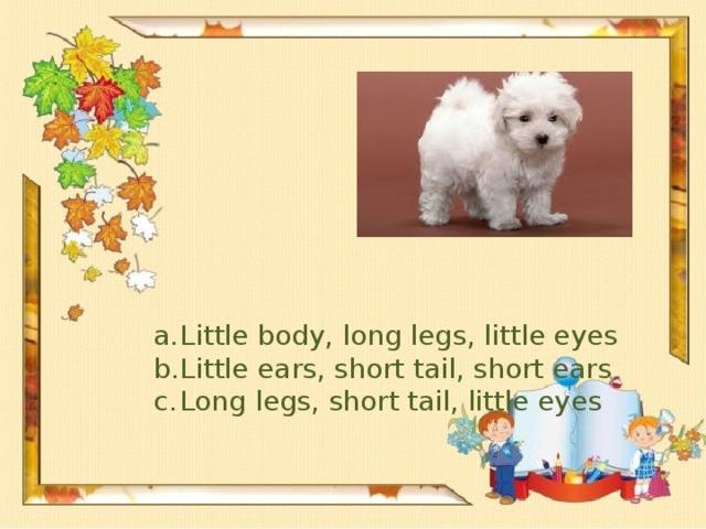 Little body, long legs, little eyes Little ears, short tail, short ears Long legs, short tail, little eyes