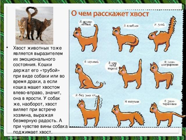 Хвост животных тоже является выразителем их эмоционального состояния. Кошки держат его «трубой» при виде собаки или во время драки, а если кошка машет хвостом влево-вправо, значит, она в ярости. У собак же, наоборот, хвост виляет при встрече хозяина, выражая безмерную радость. А при чувстве вины собака поджимает хвост.