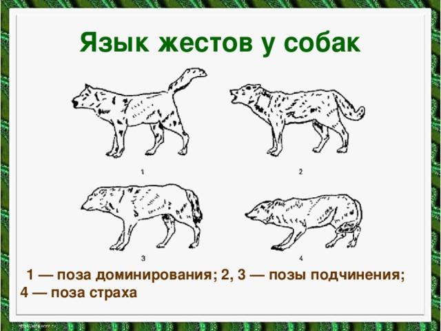 Язык жестов у собак  1 — поза доминирования; 2, 3 — позы подчинения; 4 — поза страха