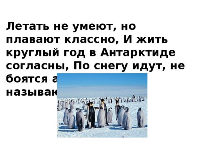 Летать не умеют, но плавают классно, И жить круглый год в Антарктиде согласны, По снегу идут, не боятся ангины, А как называются птицы …