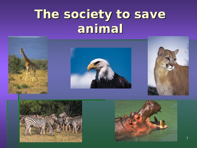 The society to save animal 03.11.16