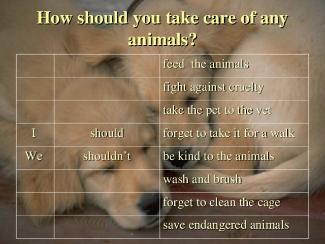 How should you take care of any animals? feed the animals fight against cruelty I should take the pet to the vet We shouldn't forget to take it for a walk be kind to the animals wash and brush forget to clean the cage save endangered animals  03.11.16