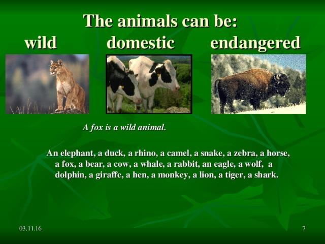 The animals can be:  wild domestic endangered  A fox is a wild animal.  An elephant, a duck, a rhino, a camel, a snake, a zebra, a horse, a fox, a bear, a cow, a whale, a rabbit, an eagle, a wolf, a dolphin, a giraffe, a hen, a monkey, a lion, a tiger, a shark.  03.11.16