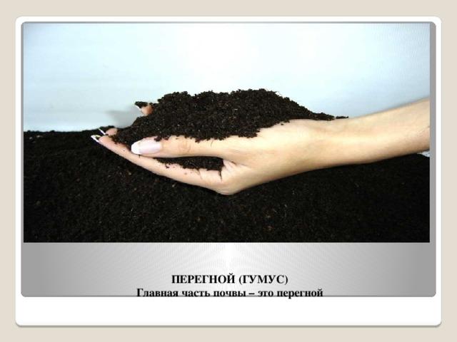 ПЕРЕГНОЙ (ГУМУС)  Главная часть почвы – это перегной