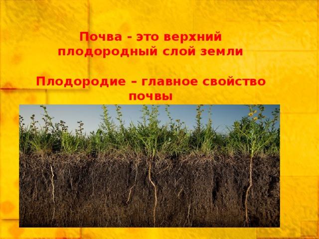Почва - это верхний плодородный слой земли  Плодородие – главное свойство почвы