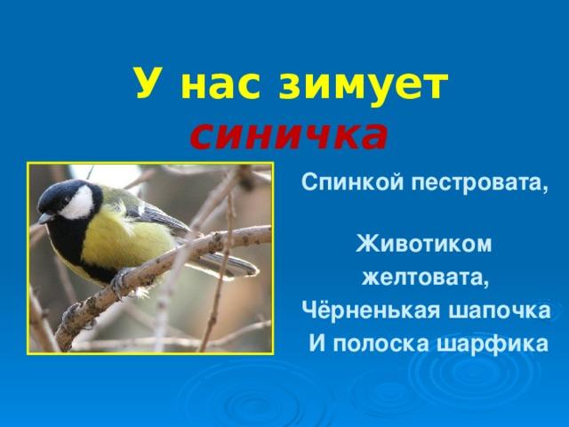 У нас зимует синичка  Спинкой пестровата,  Животиком  желтовата,  Чёрненькая шапочка  И полоска шарфика