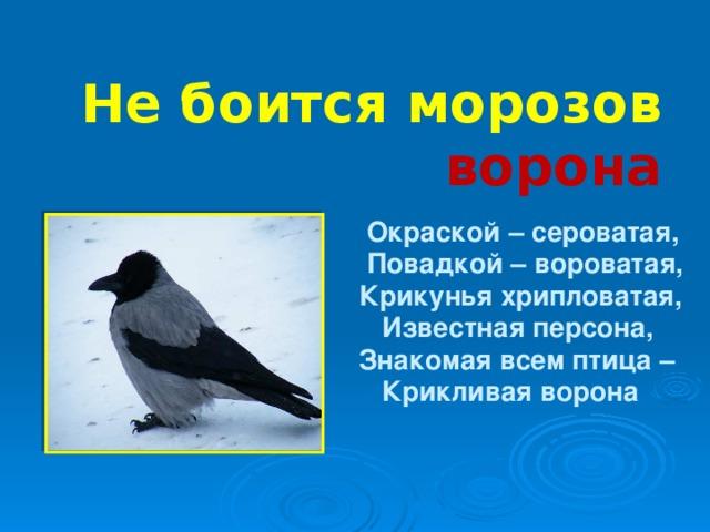 Не боится морозов ворона  Окраской – сероватая,  Повадкой – вороватая,  Крикунья хрипловатая,  Известная персона,  Знакомая всем птица –  Крикливая ворона