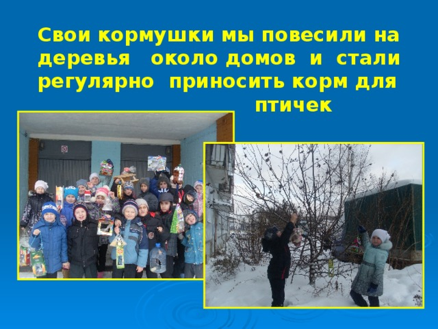 Свои кормушки мы повесили на деревья около домов и стали  регулярно приносить корм для  птичек