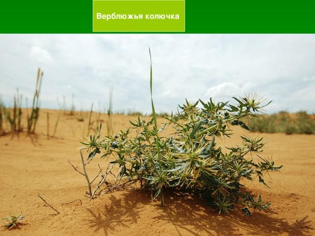 а) это природная зона, в которой растительным покровом являются  кустарники, травы, мхи, лишайники  (Тундра)  б) это природная зона с богатой и разнообразной растительностью; там растут деревья, кустарники, травы, мхи, лишайники (Лесная зона)  в) это природная зона, которая лишена сплошного растительного покрова, встречаются мхи и лишайники. Арктические пустыни Г)это природная зона с сплошным травянистым растительным покровом. Зона степей