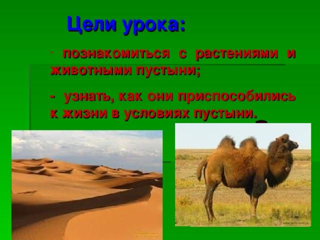 Цели урока:  познакомиться с растениями и животными пустыни; - узнать, как они приспособились к жизни в условиях пустыни.
