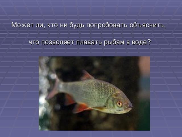 Может ли, кто ни будь попробовать объяснить,  что позволяет плавать рыбам в воде?