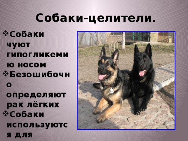 Собаки-целители.