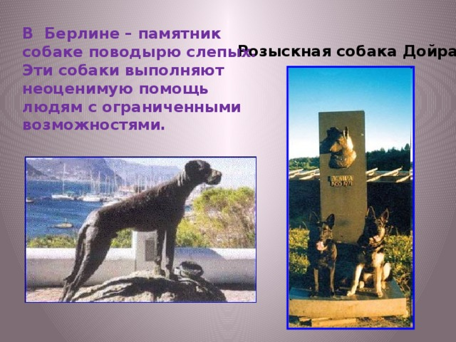 В Берлине – памятник собаке поводырю слепых. Эти собаки выполняют неоценимую помощь людям с ограниченными возможностями. Розыскная собака Дойра