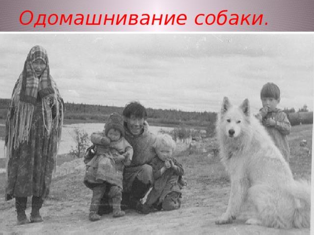 Одомашнивание собаки.